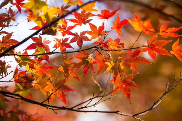 Autumn Quotes | Photo: Norio Nakayama/Creative Commons